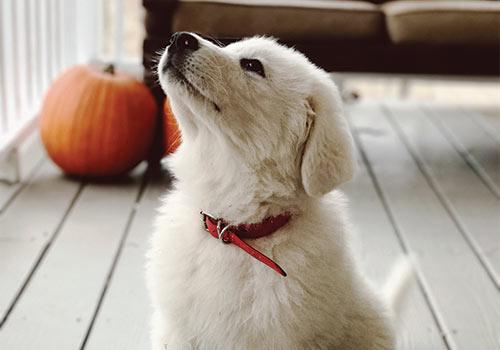 60 minute private training - the calmer dog