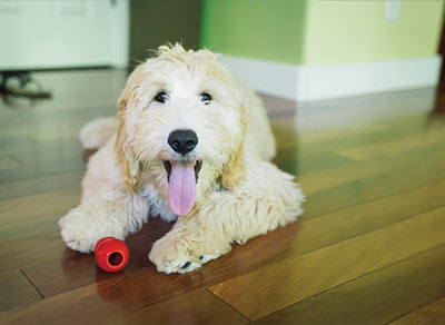 Home School Dog Training